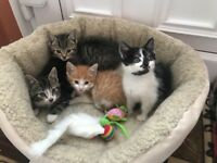 4 lovely kittens available 8 weeks old