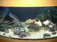 ***BARGIN FISH DEAL***