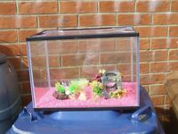 Pets At Home fish tank with accessories