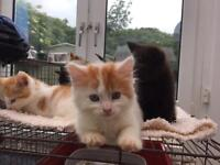 Lovely placid kittens ready now