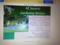 Tree stump removal & Gardening services
