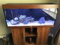 Juwel rio 240 aquarium set up