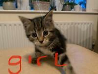 Kittens 4 sale **READY NOW***