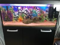 Fish Aquarium (Cabinet NOT INCLUDED) 3FT 160litres FULL SET UP with FISH (Just add water)