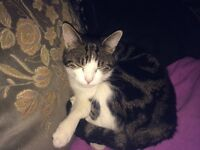 Missing from Woolston Warrington