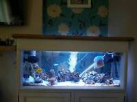 Marine fish tank full setup