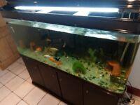 525 liter aquarium . Large complete setup.