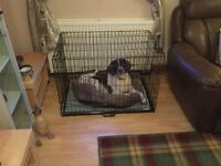 Dog Cage and bed liner, in black metal, has 2 doors and folds flat, still unopened in box.