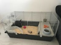 Rabbit / cage / accessories / food