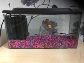 fish tank, goldfish,plattie and accessories