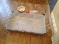 Ginipig cage, china dish, water bottle and pack that come with the cage for sale.