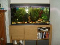 TROPICAL FISH TANK - FULL SET UP INCLUDING STAND AND FISH