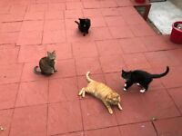 Rehoming family cats