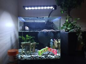 Tropical fish tank with 1fish