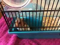 Syrian Hamster with cage