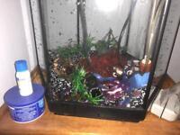 Small FISH TANK! 30 litres!