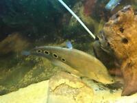 Large Tropical Fish