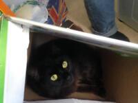 Sad sale of my black cat