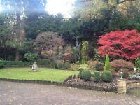 CS Garden Services - Garden Maintenance