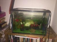 fishtanks (3) FREE