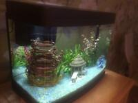 40 Litre Fish Tank - without fish