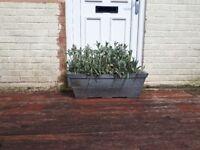 Plant pot £3