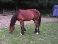 Stunning Section C yearling (readvertised due to timewaster)