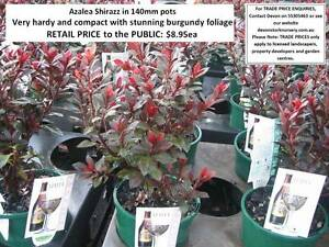 1000s of PLANTS FOR SALE - Great GIFT IDEA - Prices From $8.95 Mudgeeraba Gold Coast South Preview