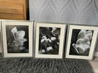 IKEA Framed Pictures