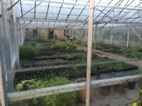 large yards for rent and plant nursery