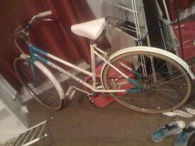 Quick sale needed! Barracuda Cipressa Road Bike plus La Riviera for free