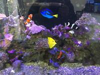 Marine aquarium live rock