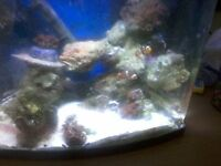 marine fish tank 30 litre with coral and fish