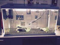 ** Aquael fish tank and all accessories***