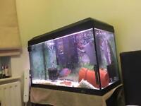 3ft tropical aquarium full set up