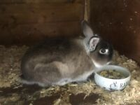 Gorgeous wee Rabbit