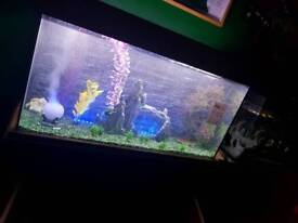 Any angel fish about please for sale