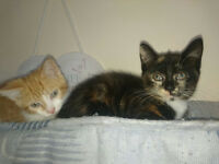 Cute Kittens Ready For new loving home