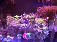 Nano marine tank and fish