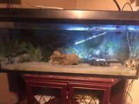 Jewel Fish Tank Great Condition