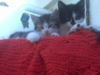 Kittens for sale to good homes