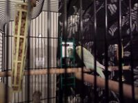 budgie and cage and stand for sale