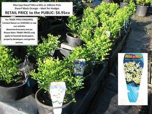 Need SMALL PLANTS that Grow to 1 Metre or Less? See Our Range!! Mudgeeraba Gold Coast South Preview