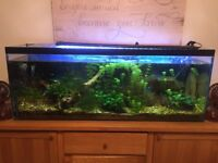 Sold pending delivery Bare 4ft Fish tank - free delivery locally