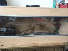 4ft reptile vivarium