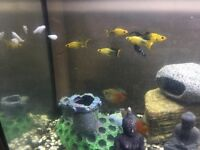 Various Tropical Fish x 23 / Adults and Babies (Fish Only)
