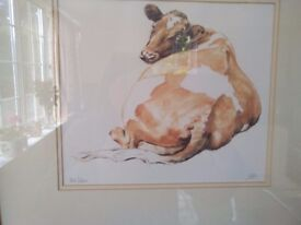 AYRSHIRE COW Limited edition signed Print