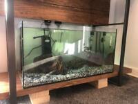 54L custom tropical fish tank 60x30~ full set up