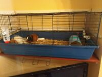 Pair of Lovely Guinea Pigs For Sale!