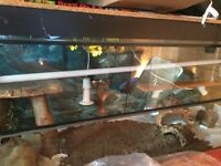 LARGE VIVARIUM FOR SALE